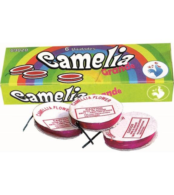 6 CAMELIA GRANDE